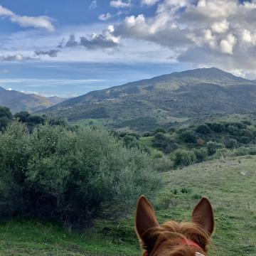 Trail_riding_Sicily