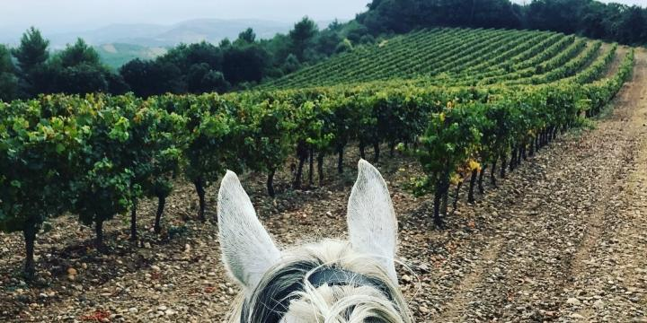 Horse riding and wine-tasting Sicily