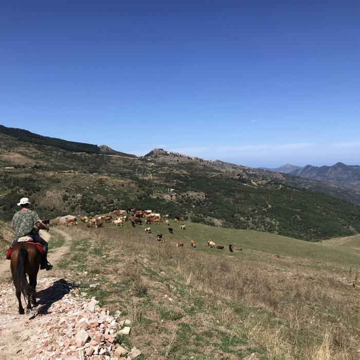 Horse riding excursion Sicily